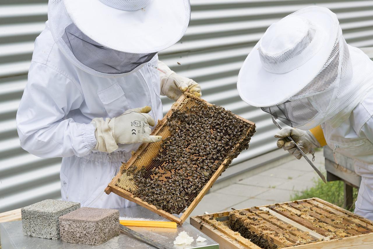 apicoltori.jpg
